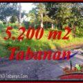 Exotic PROPERTY 5,200 m2 LAND SALE IN TABANAN TJTB334