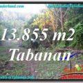 Affordable 13,855 m2 LAND FOR SALE IN Tabanan Selemadeg TJTB335