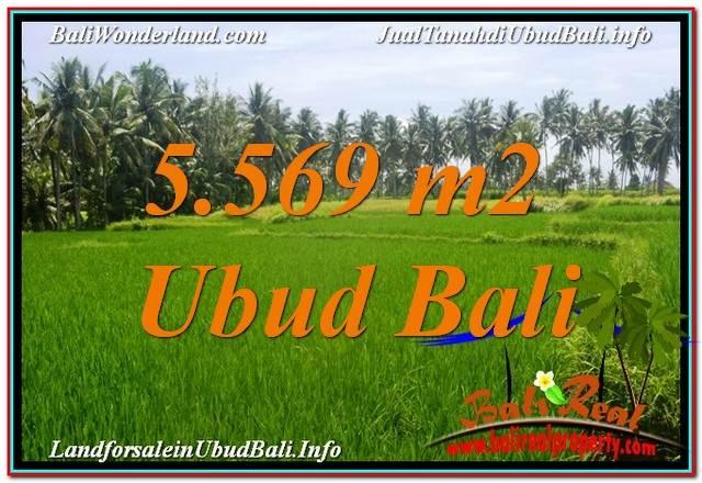 FOR SALE Exotic PROPERTY 5,569 m2 LAND IN UBUD BALI TJUB642